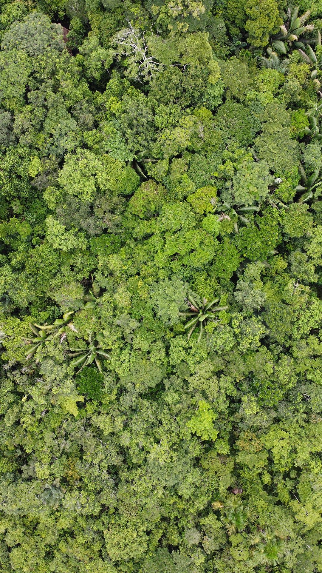 Mangrove © David Geere