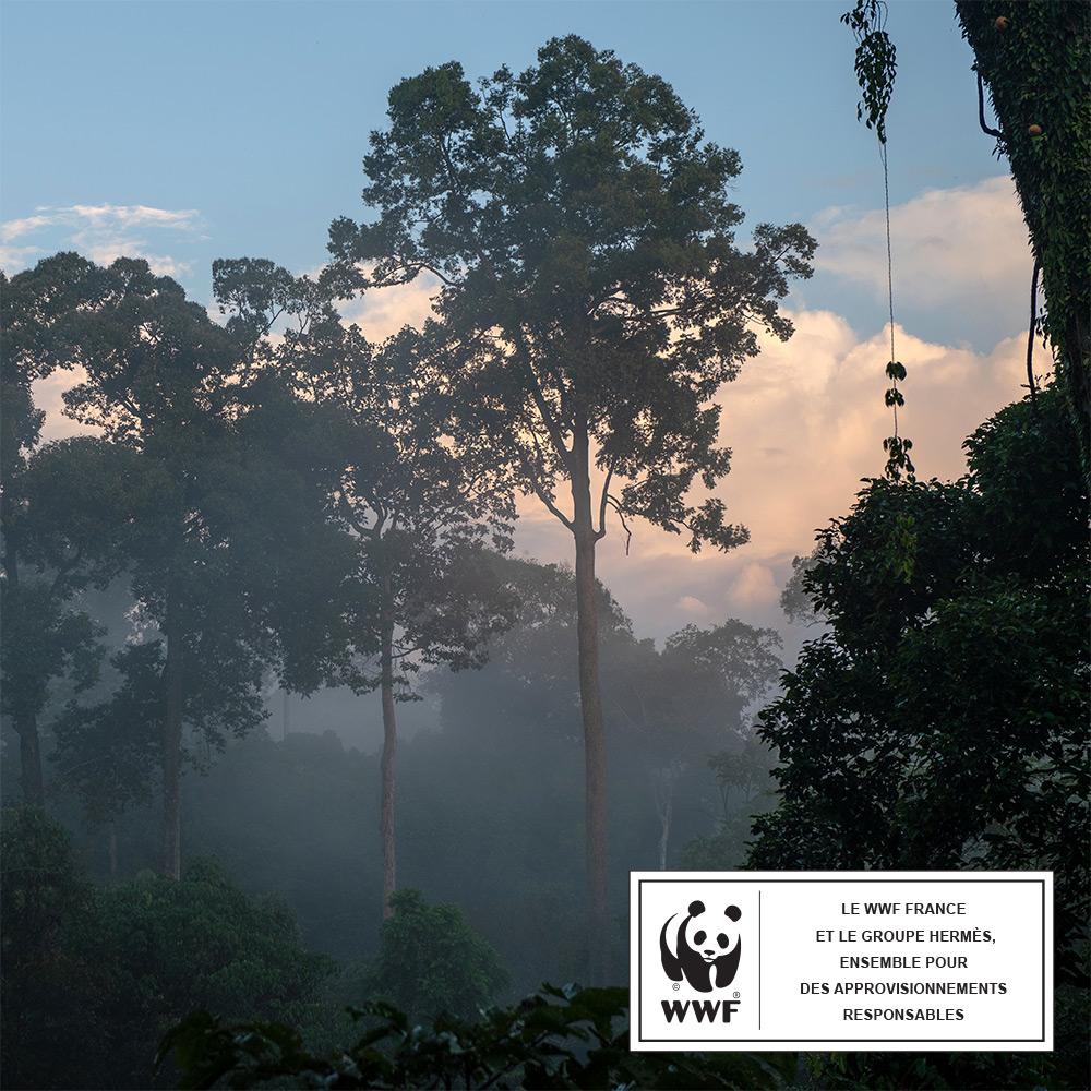 © Chris J Ratcliffe / WWF-UK